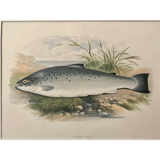 Illustration Antique Color Woodblock Print Salmon Trout Fish William Houghton C.1879 For Sale - Image 3 of 6