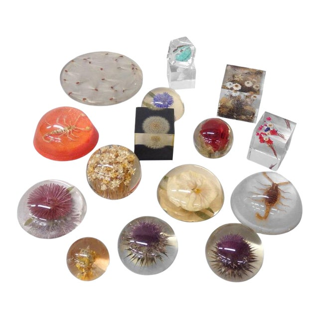 16-piece Collection Resin Captured Flowers and Insects For Sale