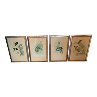 Four J. Gould and H. C. Richter Hand Colored Bird Prints Framed in Antique Mercury Glass Frames - Set of 4 For Sale