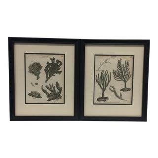 Vintage Aquatic Botanical Prints, Framed - a Pair For Sale
