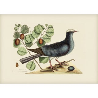 Mark Catesby Print of Partridge or Bob White, Plate 216 For Sale