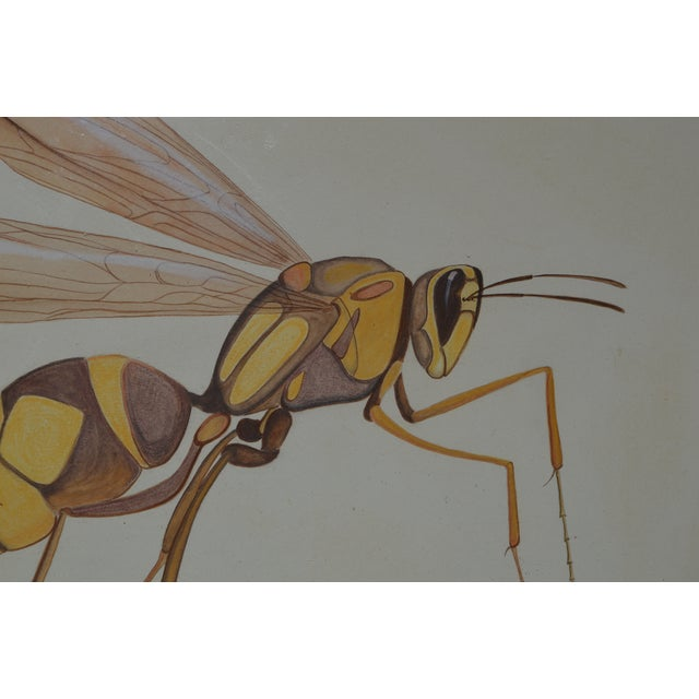 Insect Ant Pencil Paper Framed Art Still Life Painting Drawing Signed Payne For Sale - Image 11 of 12