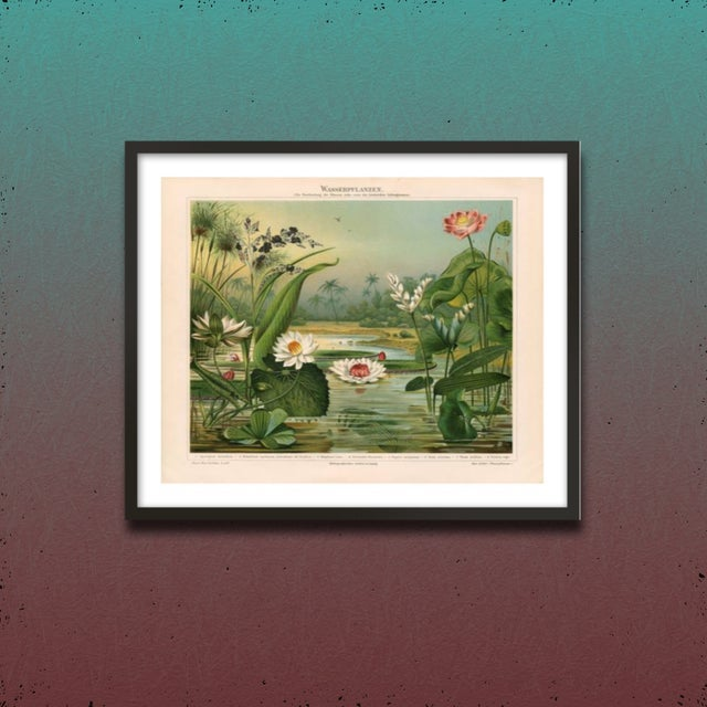 Vintage Lily Pads Archival Print For Sale - Image 4 of 4