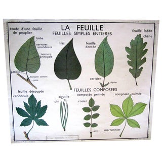 Vintage French Leaf & Stem Botanical Chart