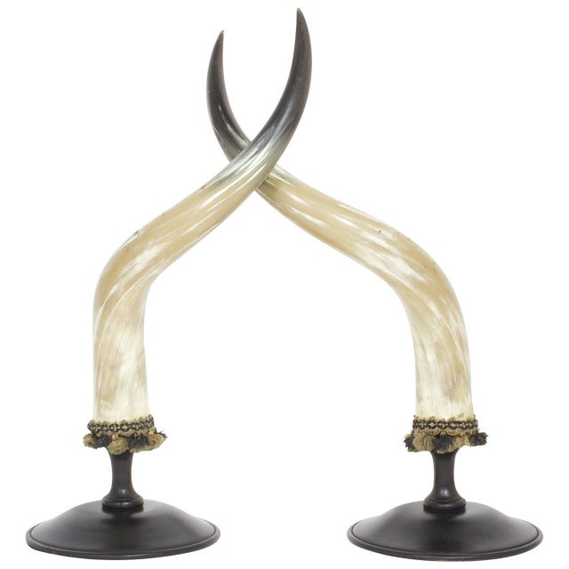 Mid-Century Large and Dramatic Polished Horns on Mounts - A Pair For Sale - Image 9 of 9
