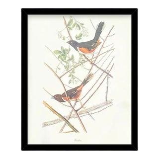 Custom Black Wood Frame of Authentic Vintage John James Audubon Towhee Bird & Botanical Print For Sale