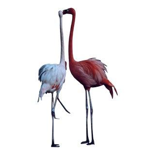 """Nicole Cohen """"Flamingos"""" Pigment Print For Sale"""