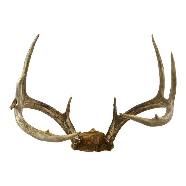 Western Deer Rack For Sale