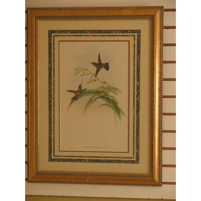 Etching Original John Gould Matted & Gold Framed Colored Etchings - a Pair For Sale - Image 7 of 13