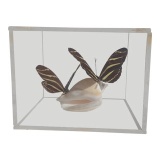 Mid Century Butterfly Specimens Lucite Block