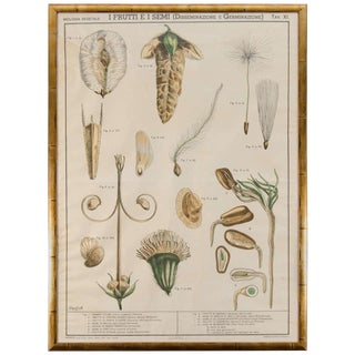 Early 20th Century Italian Botanical Print in Gilded Frame For Sale