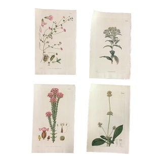 Set of Four 19th Century Hand-Colored Botanical Engravings For Sale