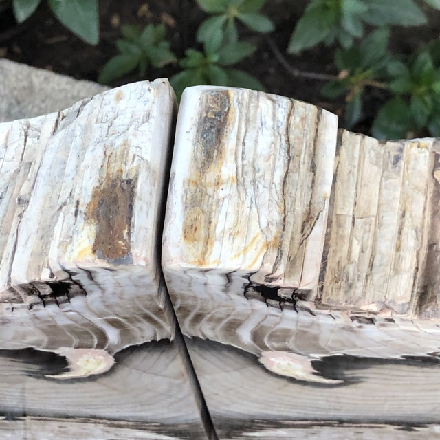 Fossilized Petrified Wood Bookends - a Pair For Sale - Image 9 of 10