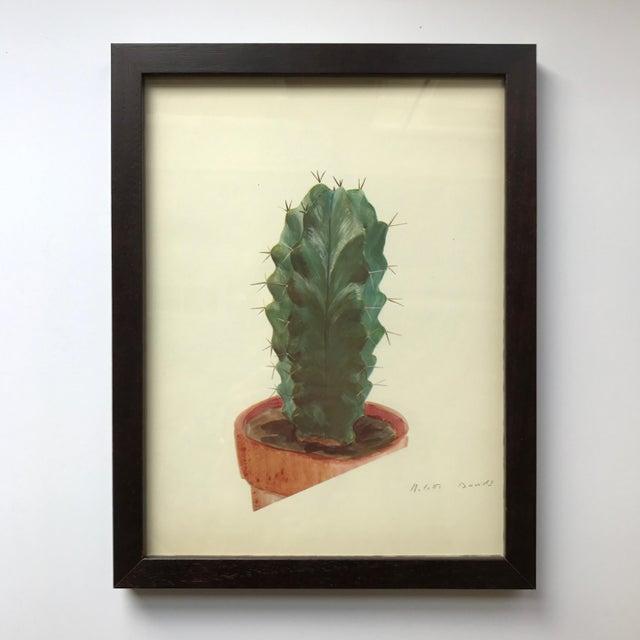 C Print Framed Rock Plants - Set of 32 For Sale - Image 7 of 11
