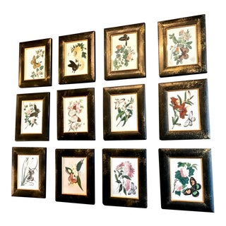 Chinese Export Butterfly Pith Paintings, Complete Set of 12