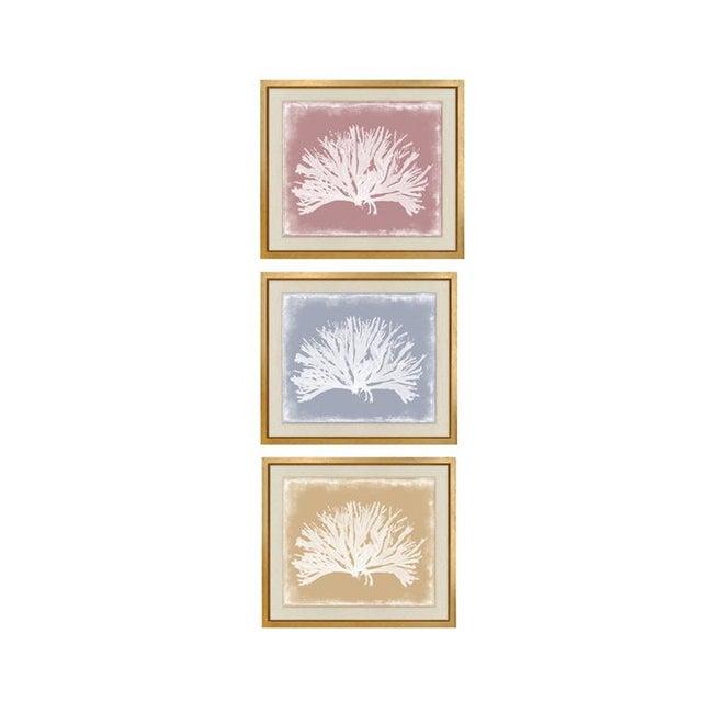 "Wood Trowbridge ""Coloured Corals"" Prints Set of Three For Sale - Image 7 of 7"