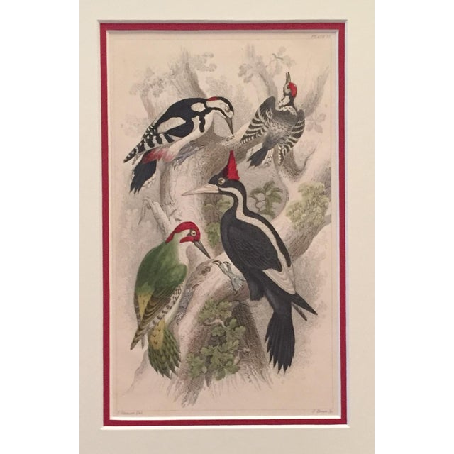 Vintage Italian Bird Print Circa 1850 For Sale - Image 4 of 4