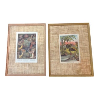 Early 20th Century Antique Animals and Sea Life Chromolithographs - A Pair For Sale
