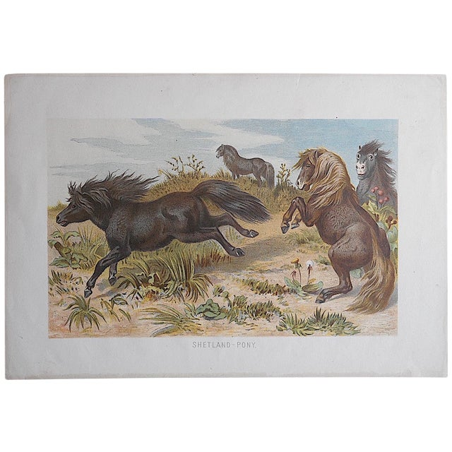 Antique Equine Lithograph - Image 1 of 3