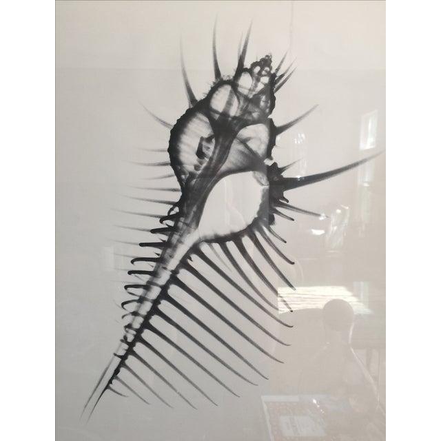 George Green X Ray Print - Image 3 of 5