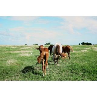"""Nicole Cohen """"5 Wild Horses"""" Large Pigment Print For Sale"""