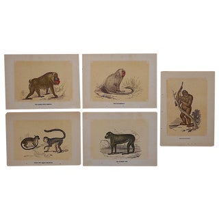 Antique Monkey Lithographs - Set of 5