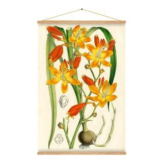 Crocosmia Botanical Wall Hanging For Sale