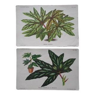 Antique Ornamental Leaves Lithographs- a Pair