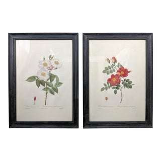 Large 19th Century French Botanical Prints Framed - a Pair For Sale
