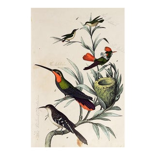 Hand Colored Hummingbird Woodcut Print For Sale
