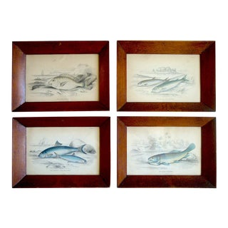 Framed Antique Fish Engravings, Set of 4 For Sale