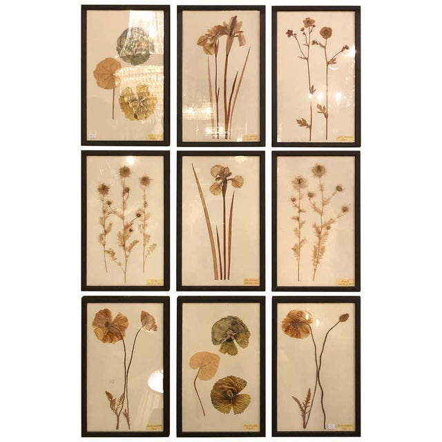 Nine Finely Framed Dried Flowers Each Under Glass Framed For Sale - Image 11 of 11