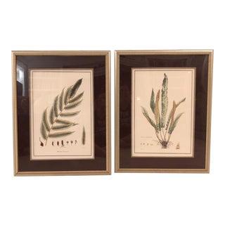 1990s Vintage Framed Botanical Illustrations- A Pair For Sale