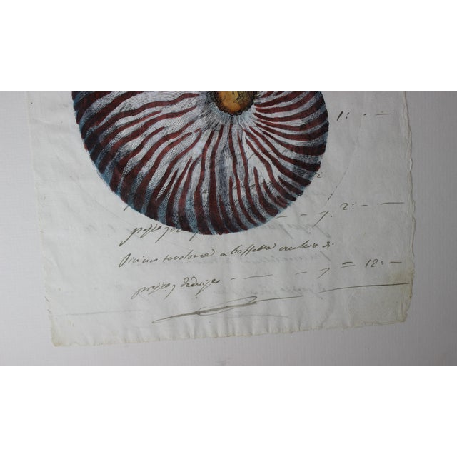Early 19th Century Hand Painted Nautilus Shell on Parchment For Sale - Image 5 of 10