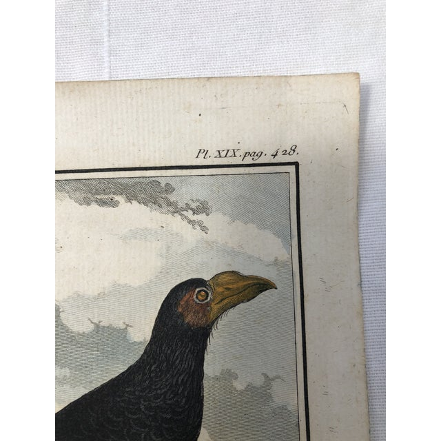 French 18th Century French Bird Engraving Signed by Jacques De Sève Featuring an Anis For Sale - Image 3 of 13