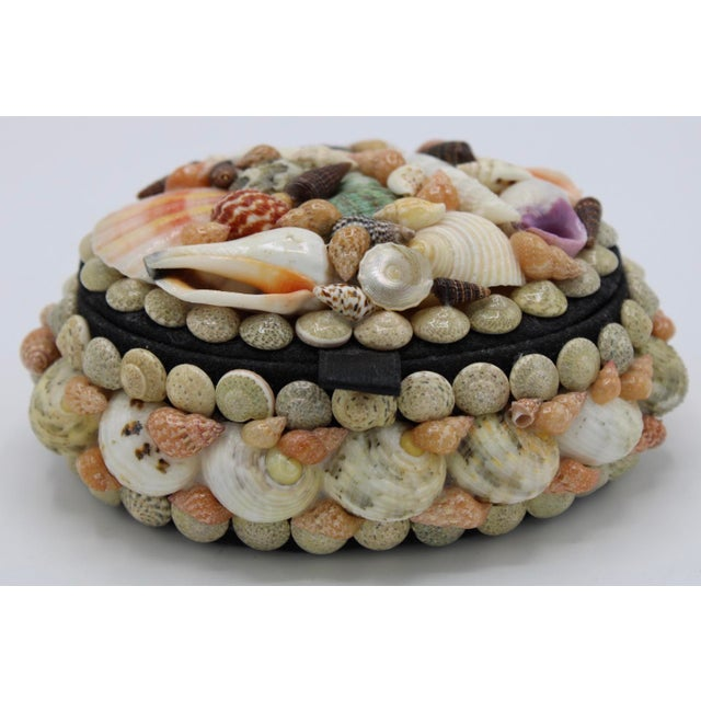 Ivory Mid 20th Century Vintage Organic Seashell Jewelry Treasure Box For Sale - Image 8 of 12
