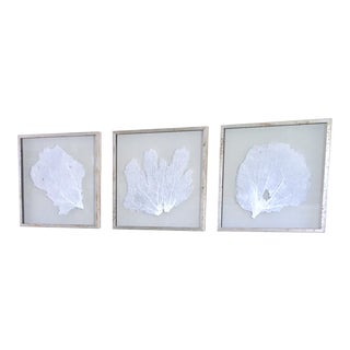 Giant Natural Sea Fans Triptych Framed in Acid Washed Distressed Silver Leaf Moulding~ Coastal Wall Art Decor From Bliss Home and Design - Set of 3