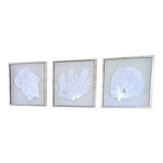 Karen Robertson Silver Framed Sea Fans ~ Coastal Wall Art Decor From Bliss Home and Design - Set of 3