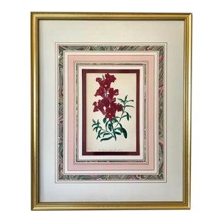 Antique Paxton Botanical Color Lithograph Snap Dragons C.1840 For Sale
