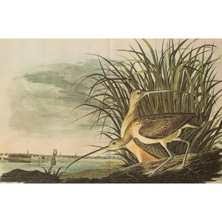 1966 Cottage Print of Long-Billed Curlew by Audubon For Sale