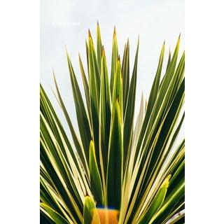 """""""California Yucca"""" Original Framed Photograph"""