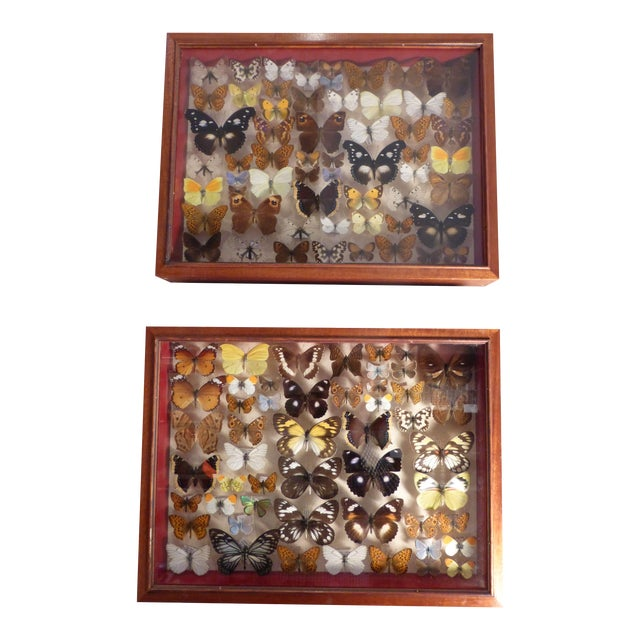 Tropical Butterfly Collection - A Pair - Image 1 of 2