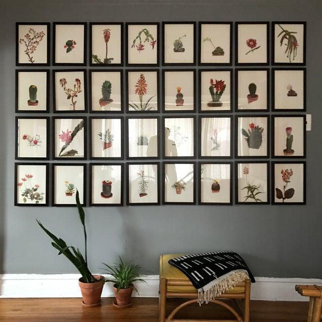 Framed Rock Plants - Set of 32 - Image 3 of 11