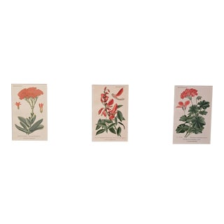 1890 Antique French Botanical Chromolithographs- Set of 3, Matted For Sale