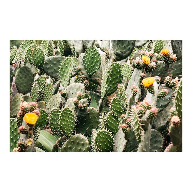 """""""Prickly Pear Flowers"""" Original 24x36 Photograph For Sale"""