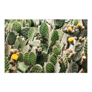 """Prickly Pear Flowers"" Original Framed Photograph"