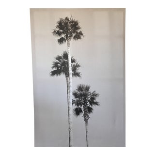 Black & White Palm Tree Print For Sale