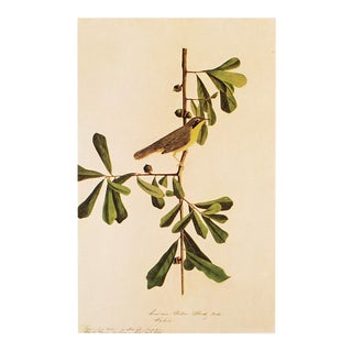 Louisiana Yellow-Throat Finch by John J. Audubon, CVintage Cottage Print For Sale