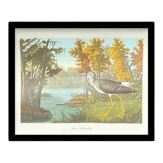 Custom Black Wood Frame of Authentic Vintage John James Audubon Lesser Yellow Legs Bird & Botanical Print For Sale