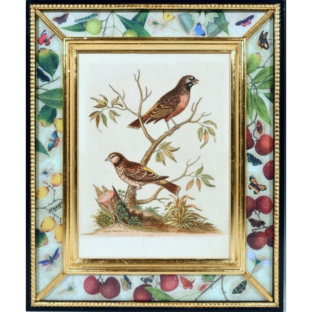 Metal C. 1740 George Edwards Engravings of Birds - Set of 12 For Sale - Image 7 of 12
